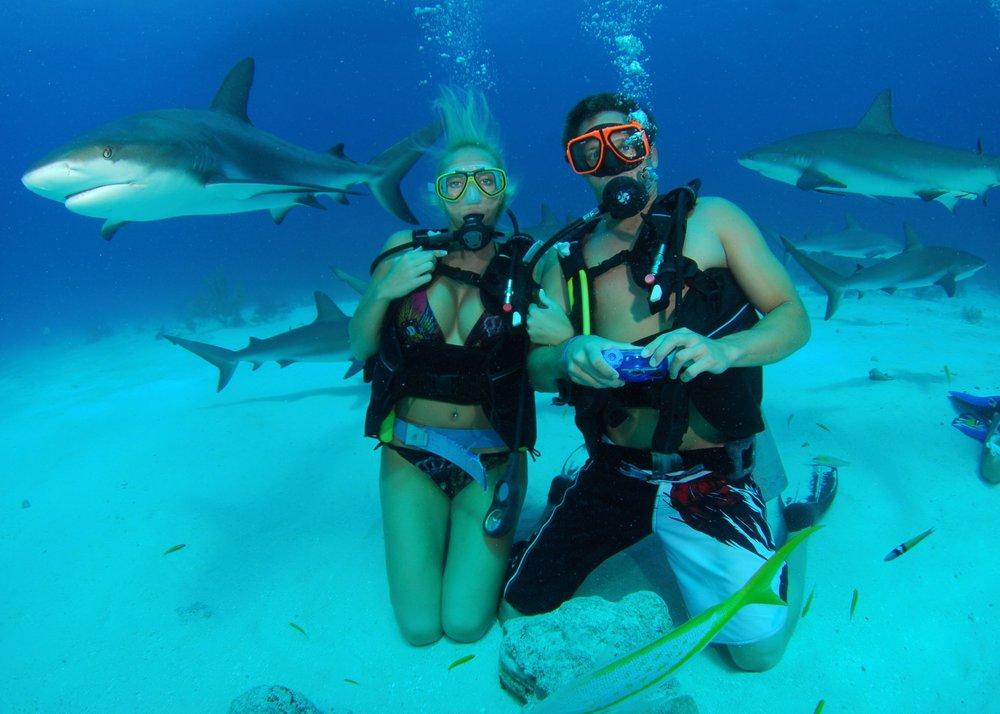 honeymoon shark diving