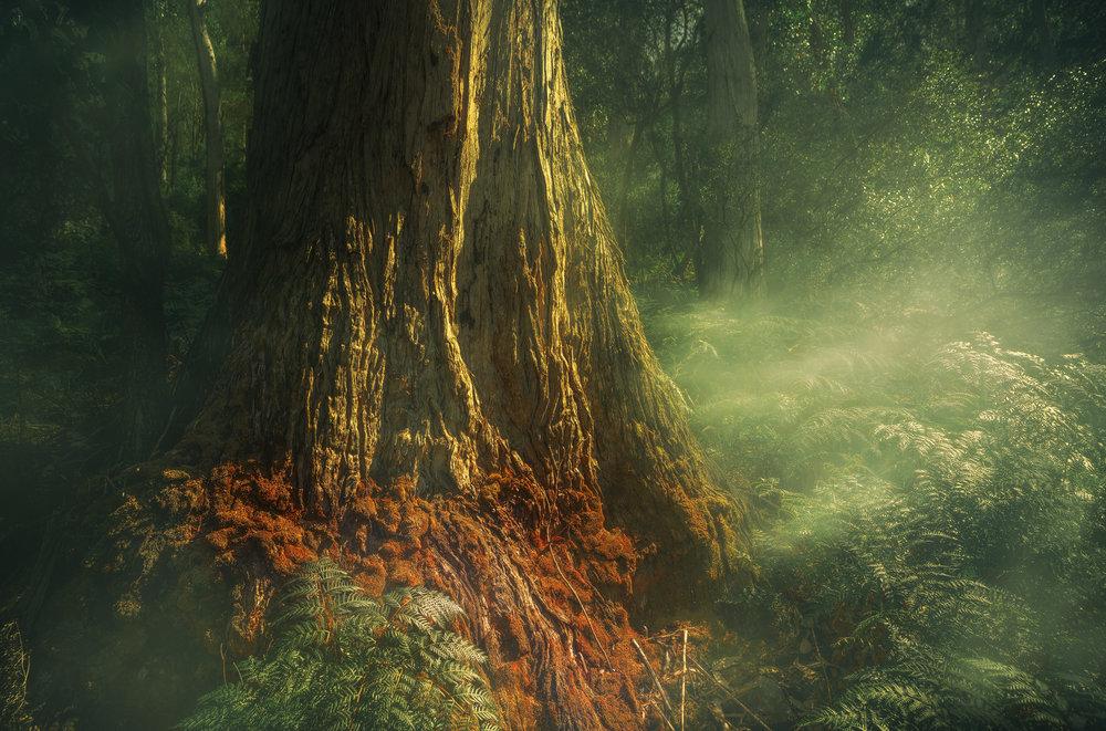 Jurasic tree.jpg