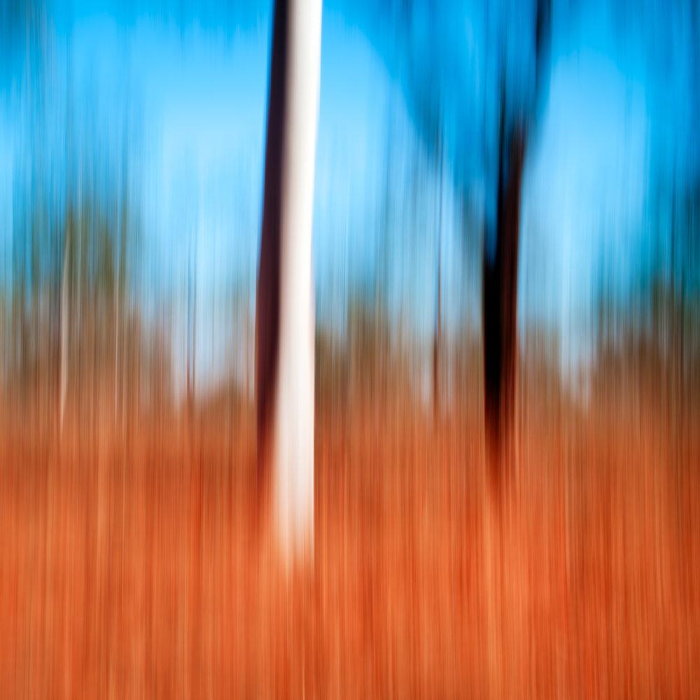 Motion blur trees web.jpg