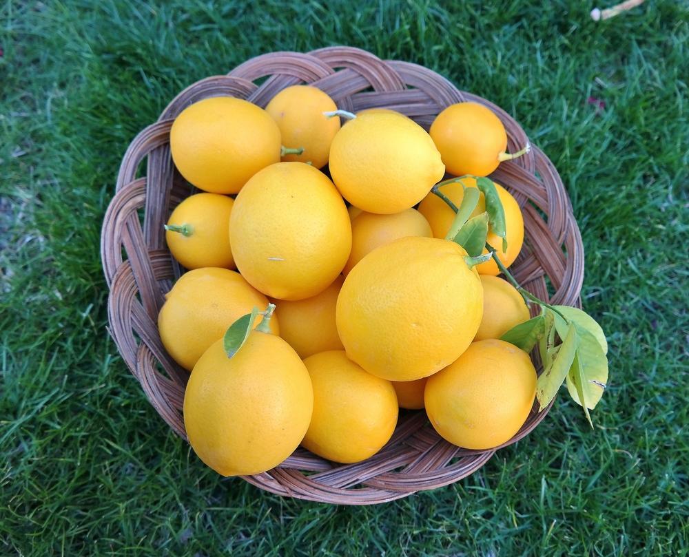 Meyer Lemons Arizona