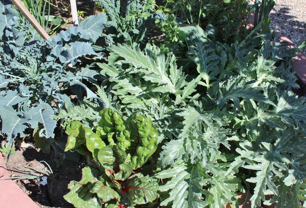 Gardening February Phoenix