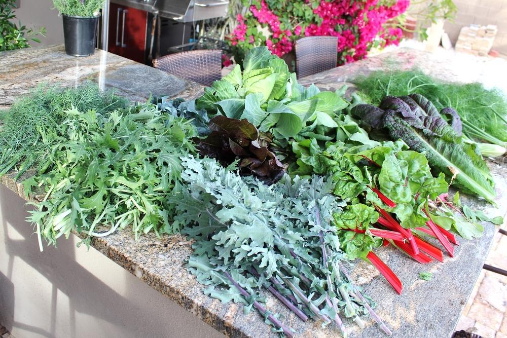 Phoenix gardening spigarello, dill, kale, mustard, fennel