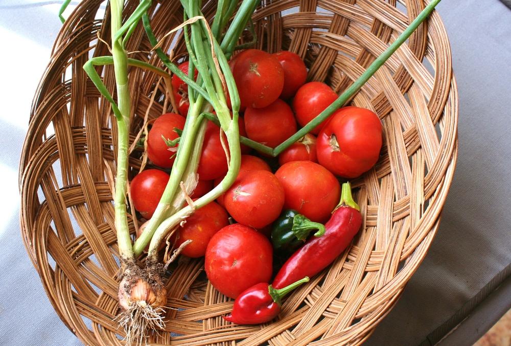 gardening salsa arizona