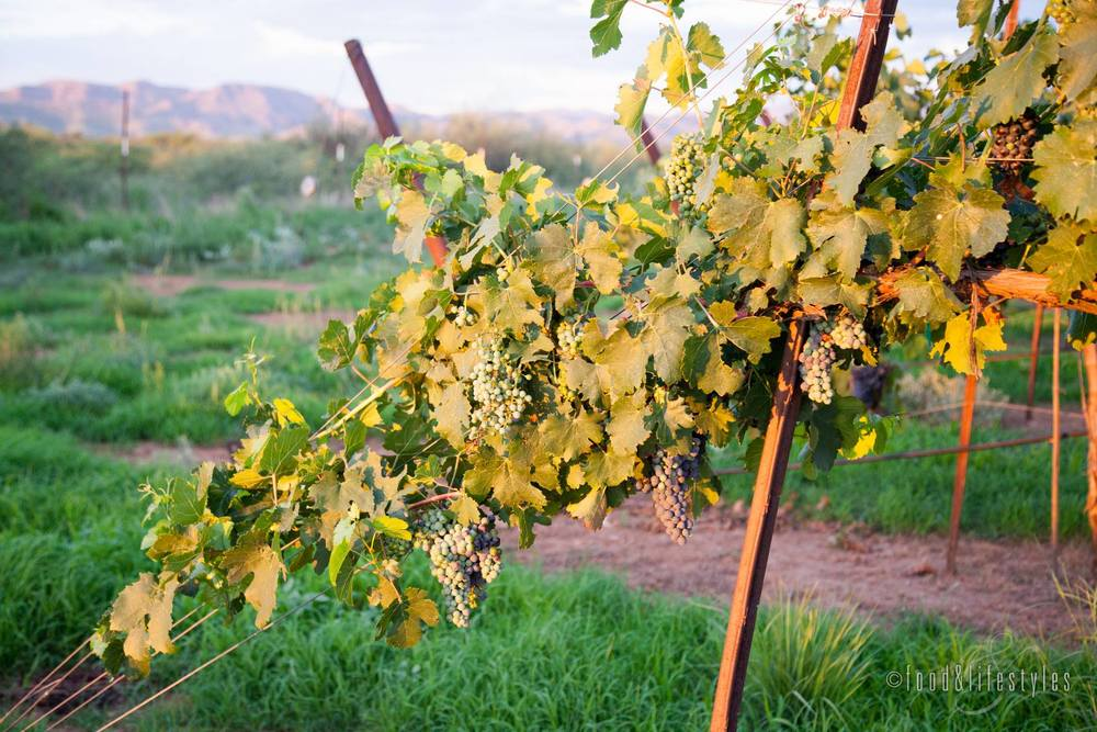 LDV Vineyard  (photo by Jenelle Bonifield of Food & Lifestyles)