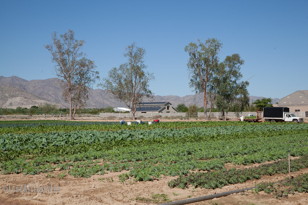 Blue Sky Organic Farms (photo by Jenelle Bonifield)