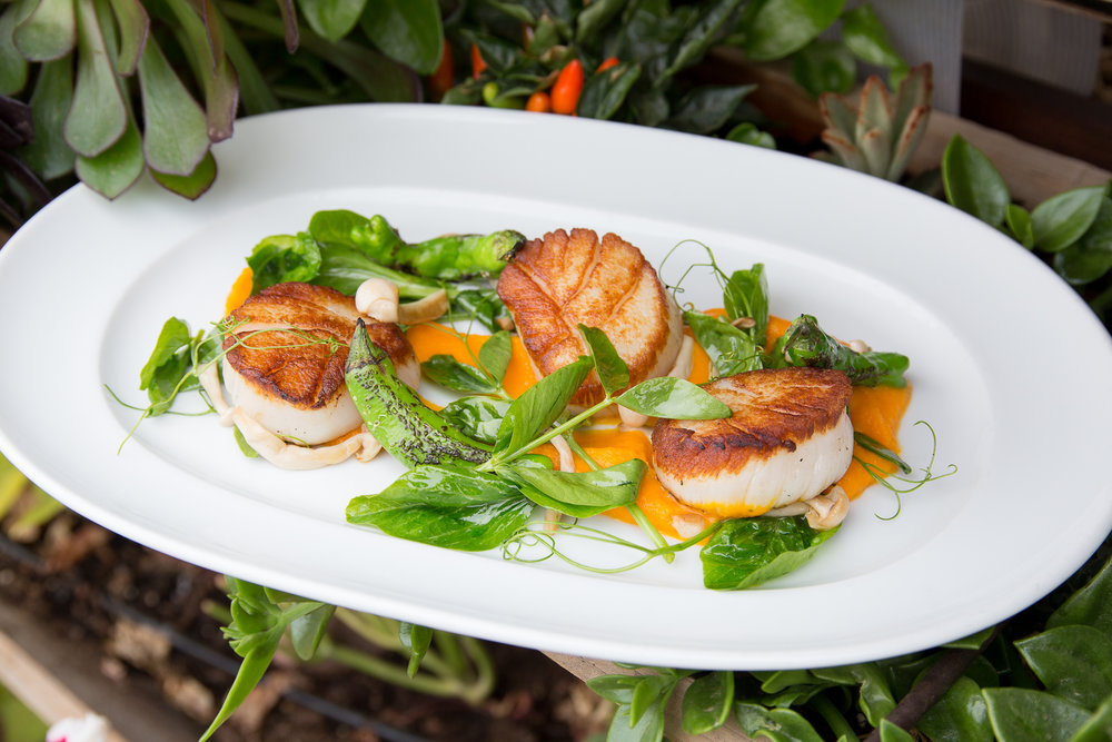 Scallops with Carrot Puree, Pea Tendrils, and Shishito Peppers  (Photos: Debby Wolvos)