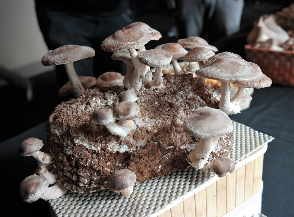 Wild About Game Mushrooms