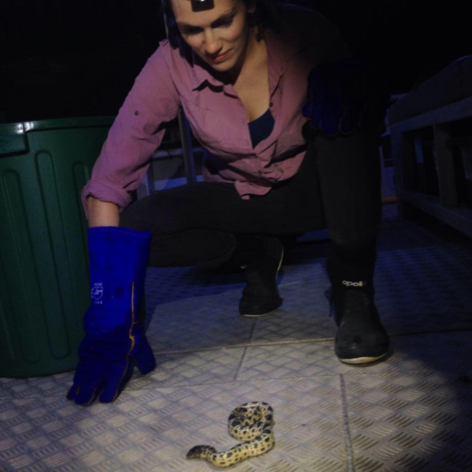 Catching a baby sea snake ( Hydrophis stokesii ) off the coast of Broome in Western Australia.