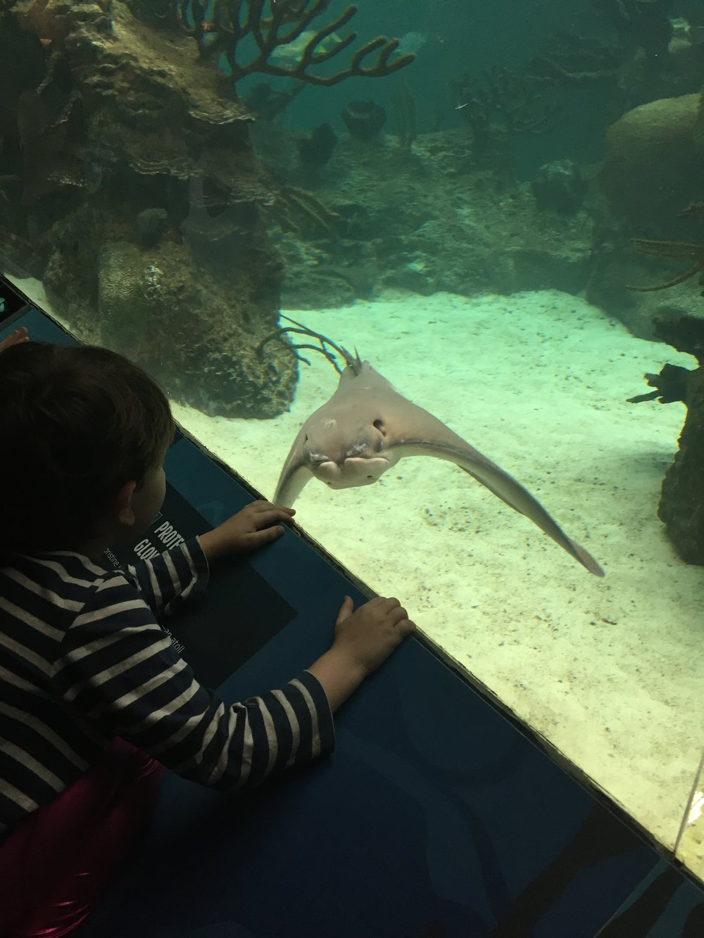"Lyric greeted the cownose ray by saying ""Hi, you are weird"", but not in a judgy way. I think he's just delighted by weirdness."