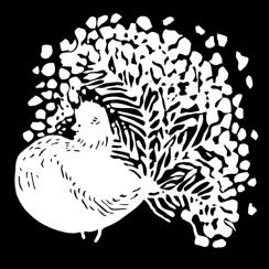 Påfågelsduva