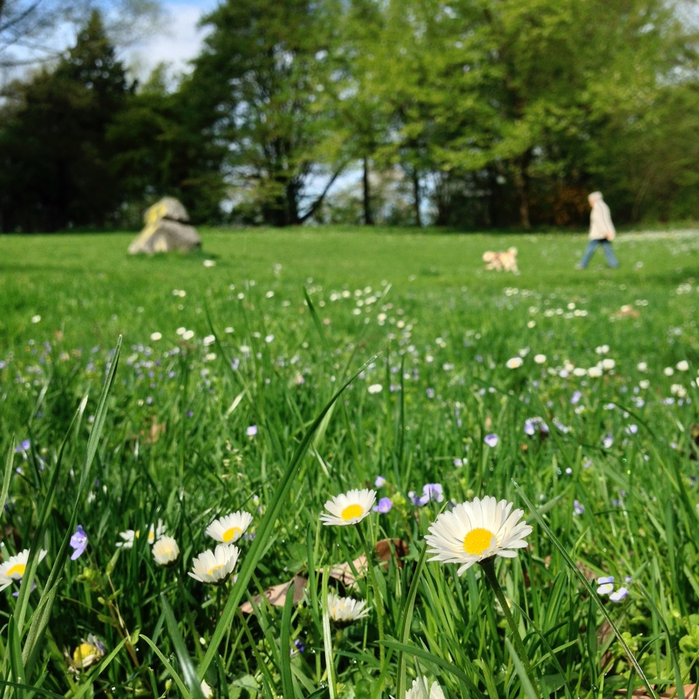 Die grüne Idylle im Donnenbergpark erreichen Sie von Ihrer Wohnung in der Fürstenallee 21 bequem zu Fuss.