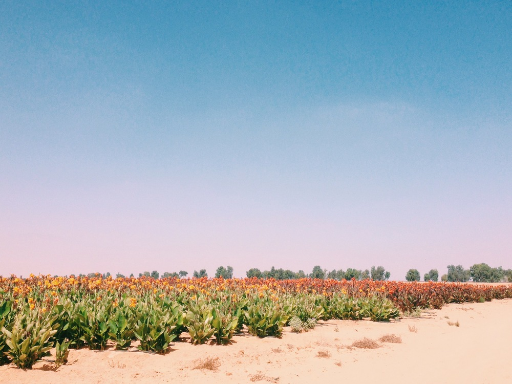 """And the Desert will bloom""- Ben Gurion"