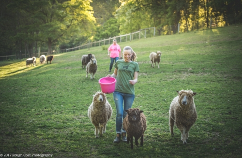 Irina at feeding time with Primrose, Sir Clive, and Timi, the longwool sheep by her side.   Photo credit to Valerie Buller of    Rough Coat Photography,    2017.