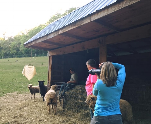Valerie taking some product shots with the sheep involved.
