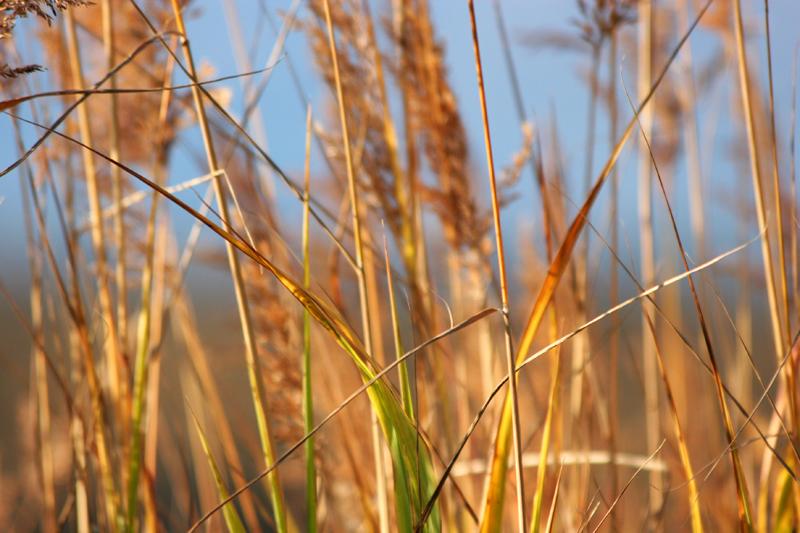Grasses: Alaska