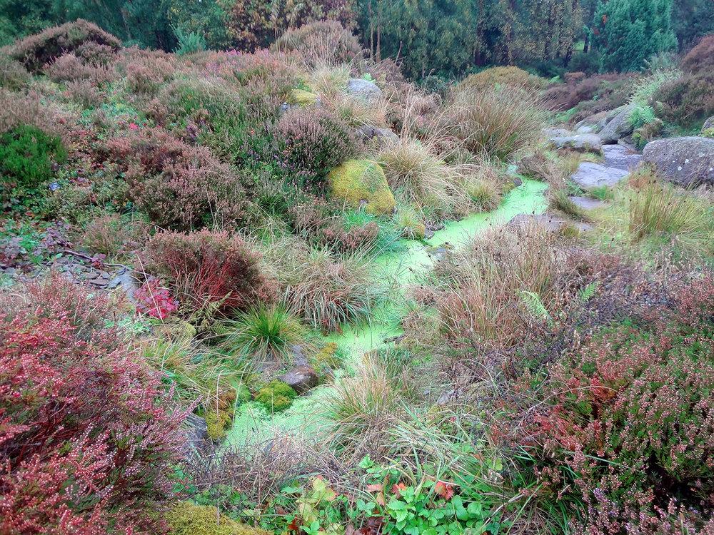 Dundee Botanic Garden, Scotland