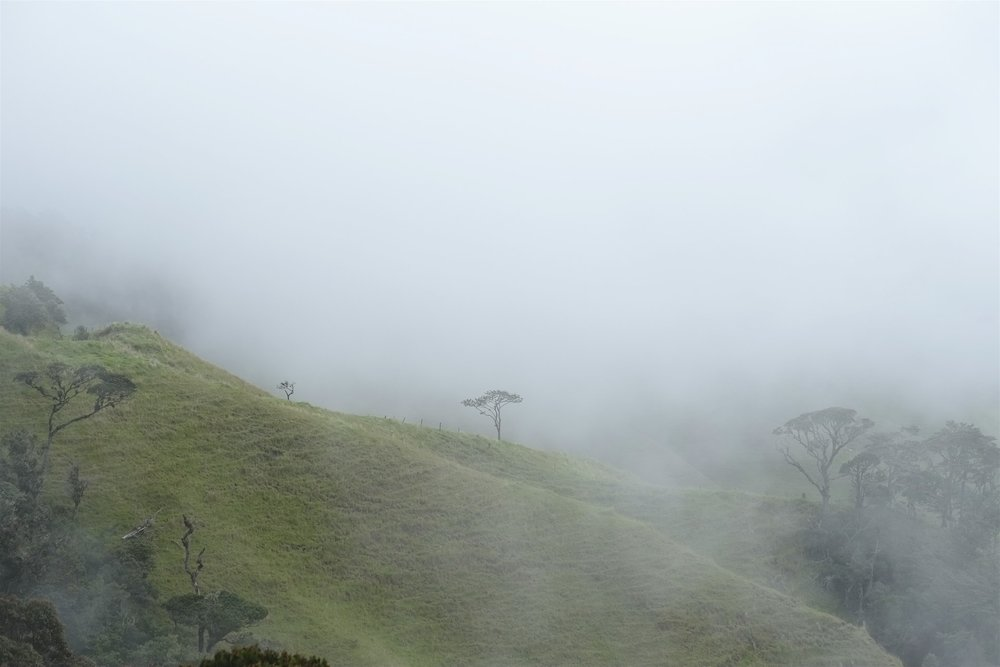 Tree in the fog, in Colombia.
