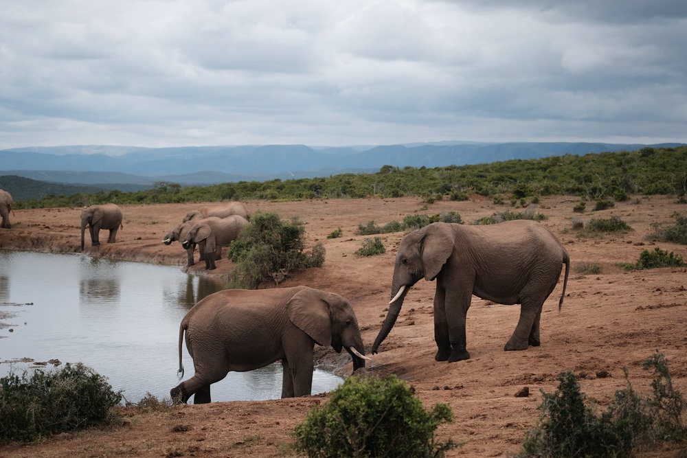 In Addo National Park