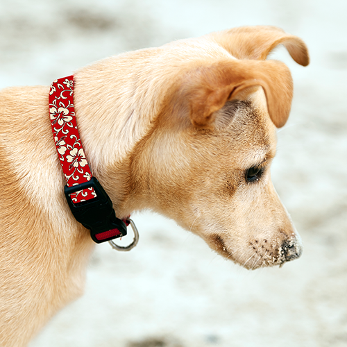 'Ilio (Dog) Collars