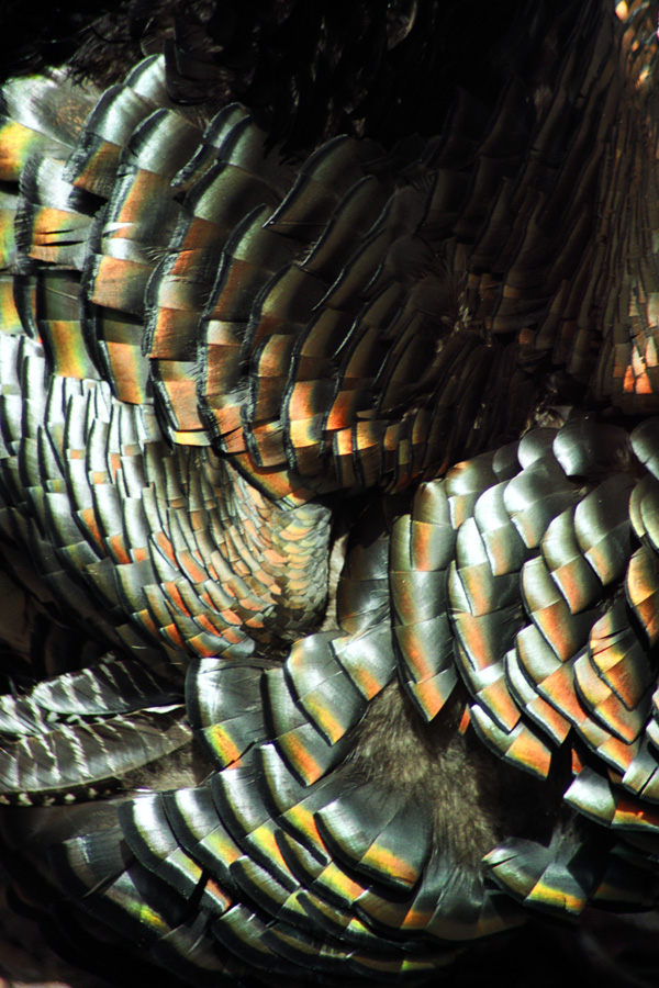 Turkey I