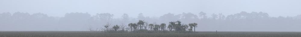 Tree Island in Rain