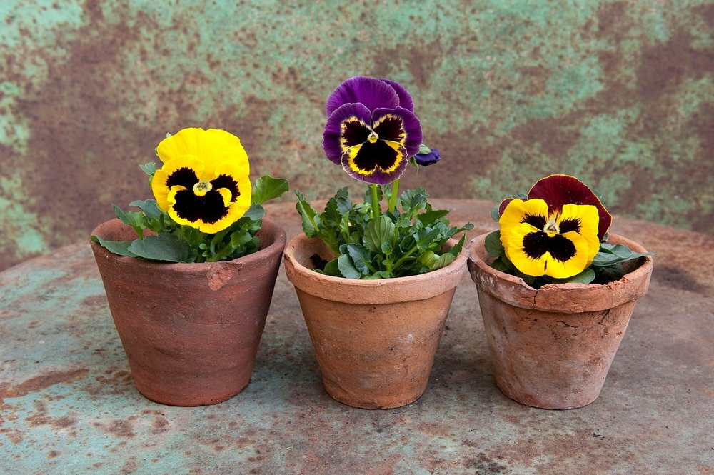 You don't need to have a garden to start gardening - a few potted plants is a great way to begin.