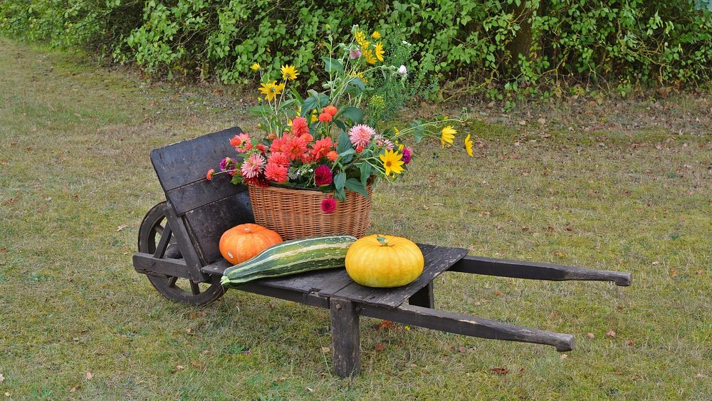 From nurturing the growth of a flowerbed, to harvesting your own vegetables, one thing's for sure: gardening is good for your mental health.