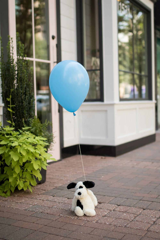Bashful Black & Cream Puppy with Blue Balloon
