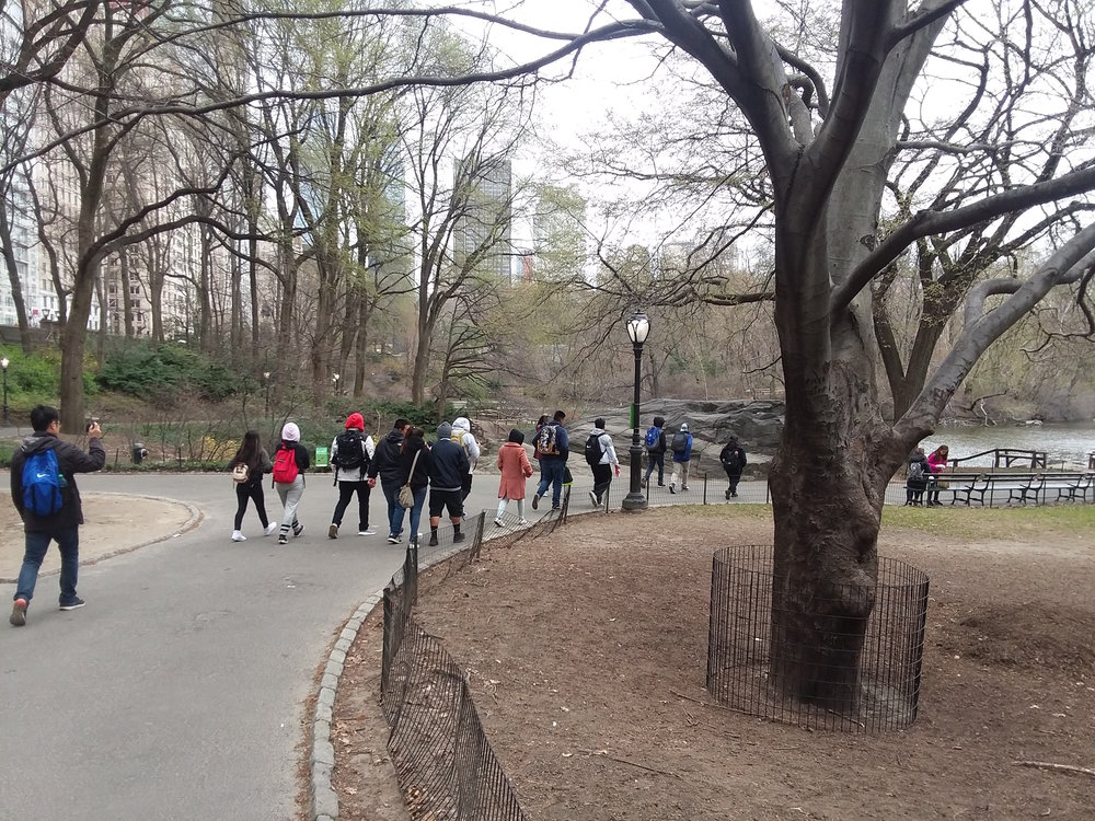 Central Park for lunch