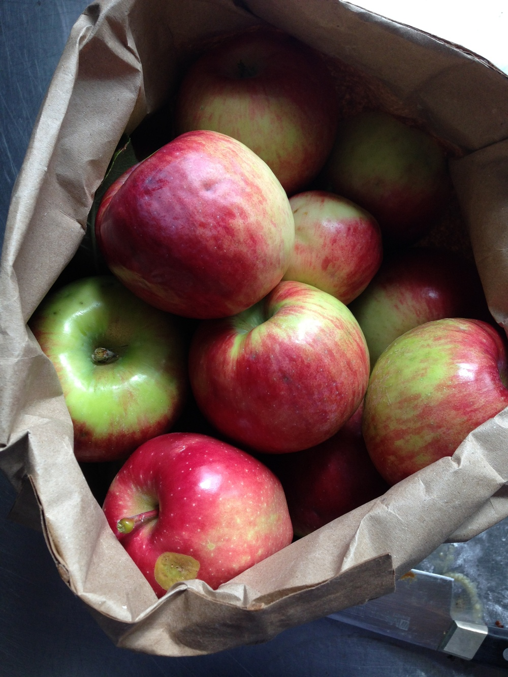 Local Apples (Barnstable Village)