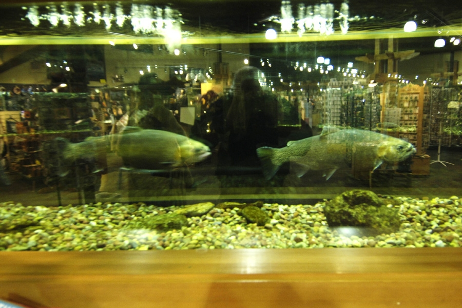 aquarium photo.JPG