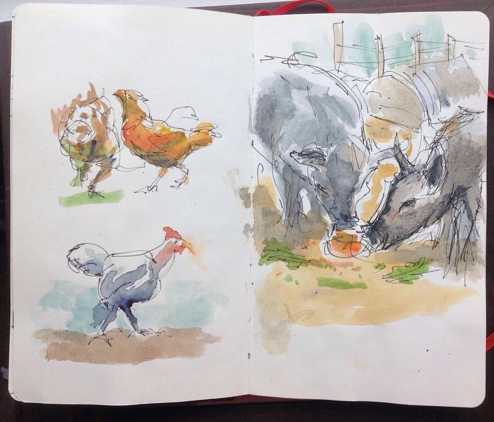 pig_sketch
