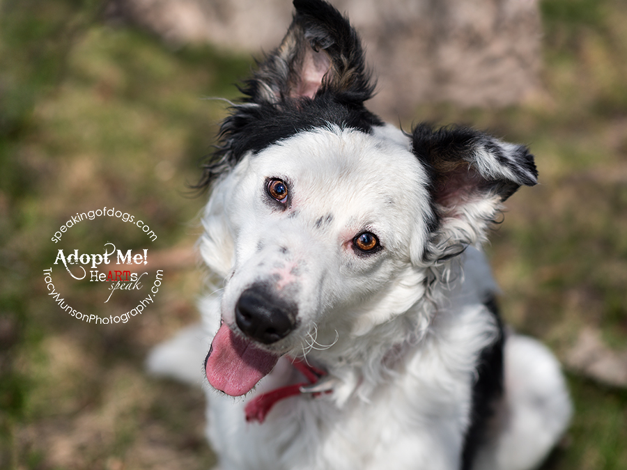 Chex is a rescue dog available in the GTA through Speaking of Dogs Rescue.