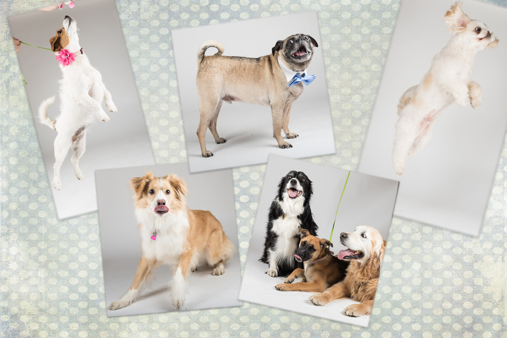 Don't worry, I got loads of great photos of these dogs for the calendar...these just ain't them.