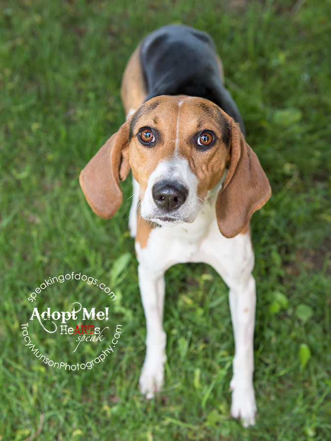 Foxy lady foxhound looking for love in the GTA!