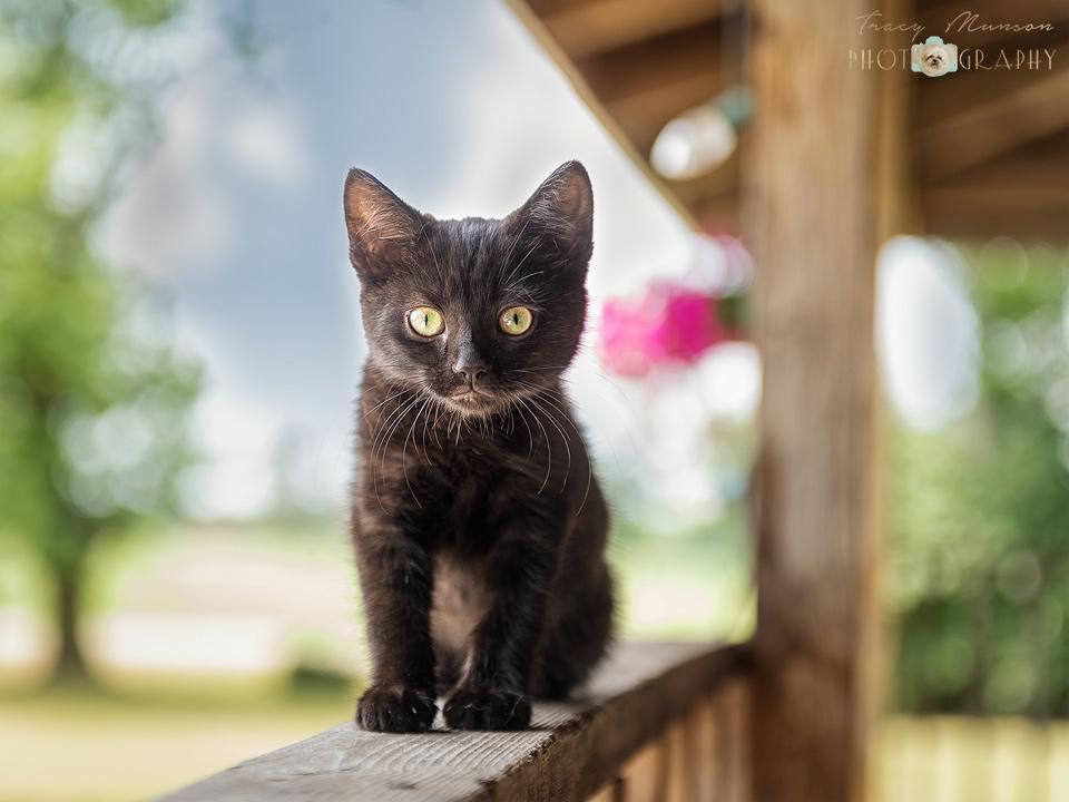 A photo of a black kitten on a porch railing. Portrait by Toronto Pet Photographer, Tracy Munson.