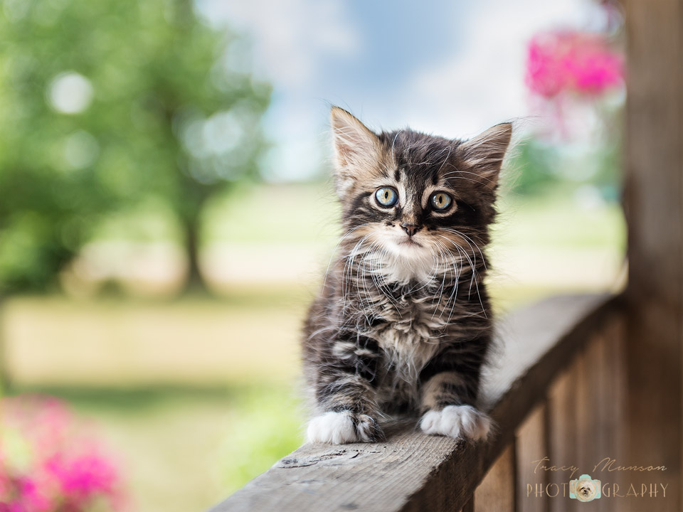Kitten on Porch Railing