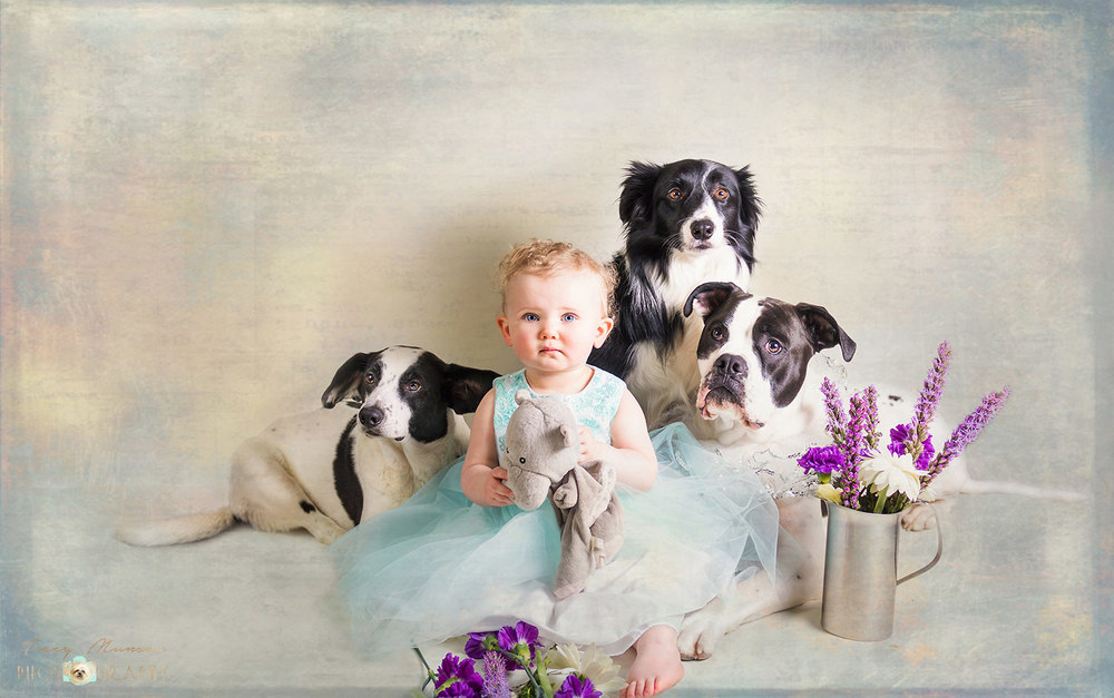 A portrait of a toddler with her three loyal dogs, by Toronto Pet Photographer, Tracy Munson.