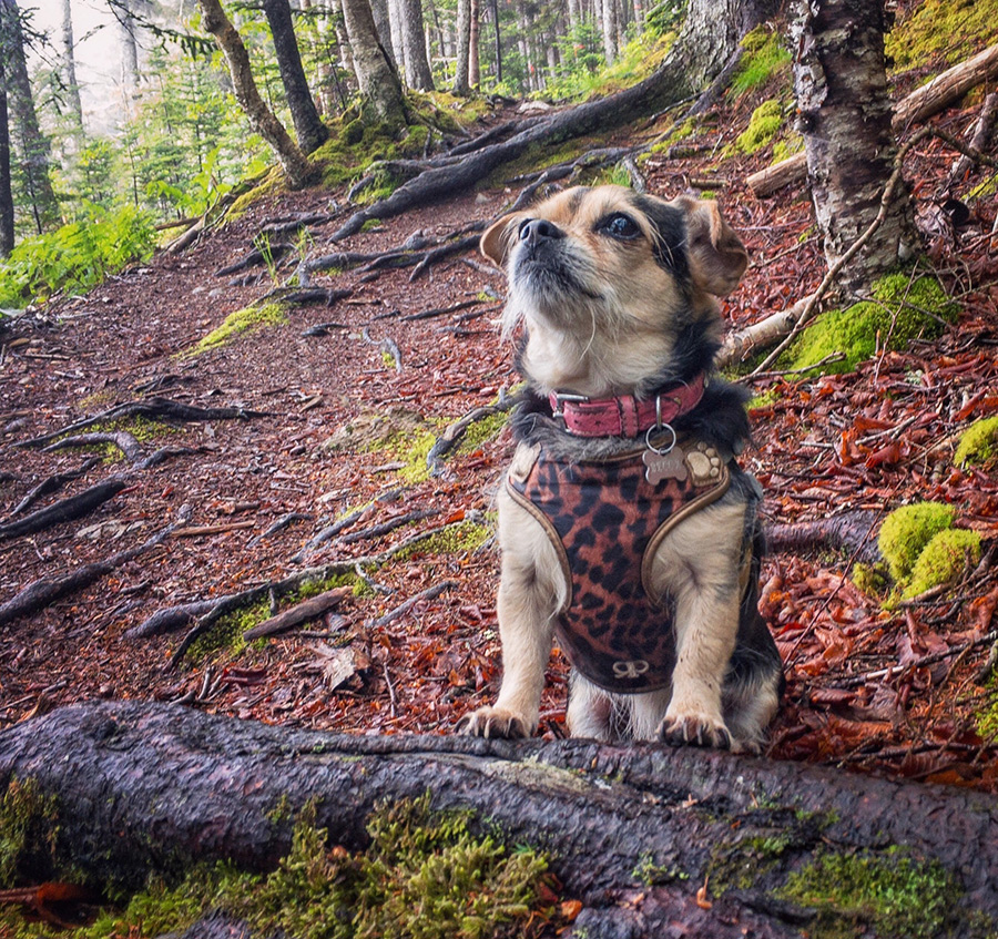 In this photo of Becca, Queen of the Forest, I've removed her leash and some people walking in the background, using the Touch Retouch app, which is even more advanced than the healing brush in Snapseed.