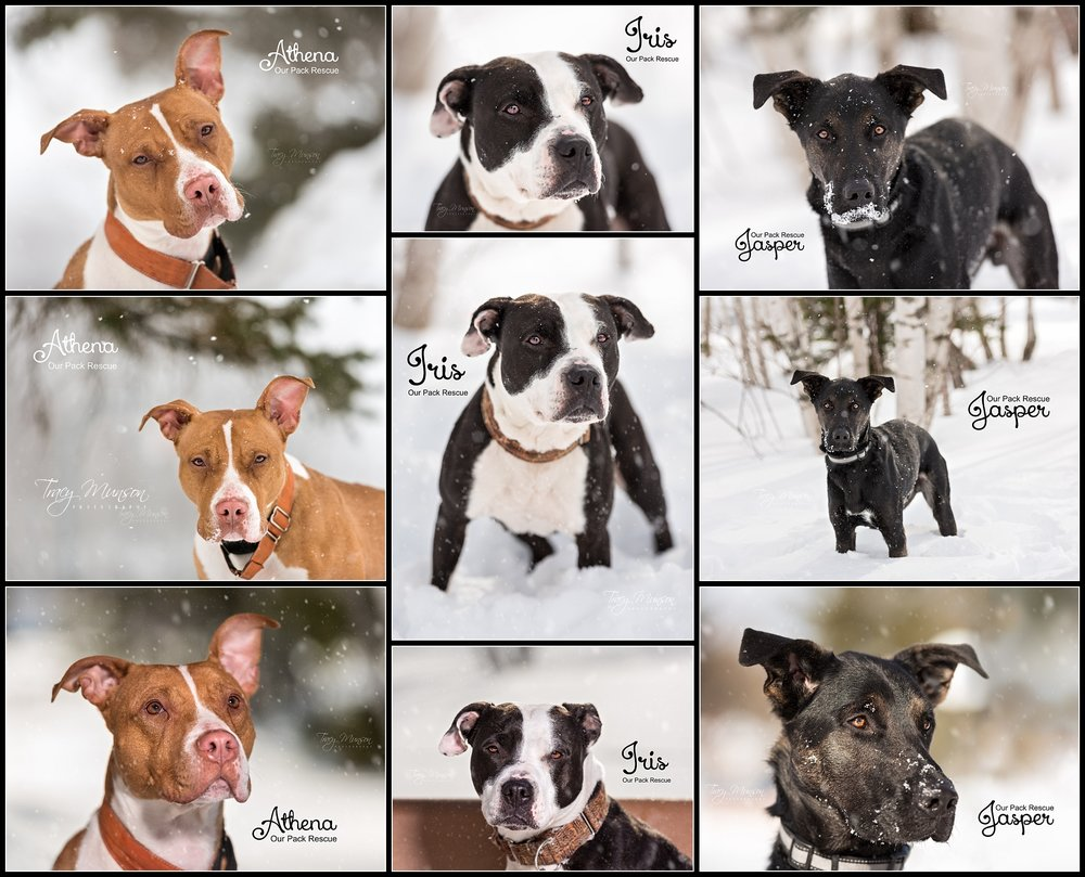Athena, Iris, and Jasper are rescue dogs looking for forever families while in the care of Our Pack Animal Rescue, Moncton, NB.