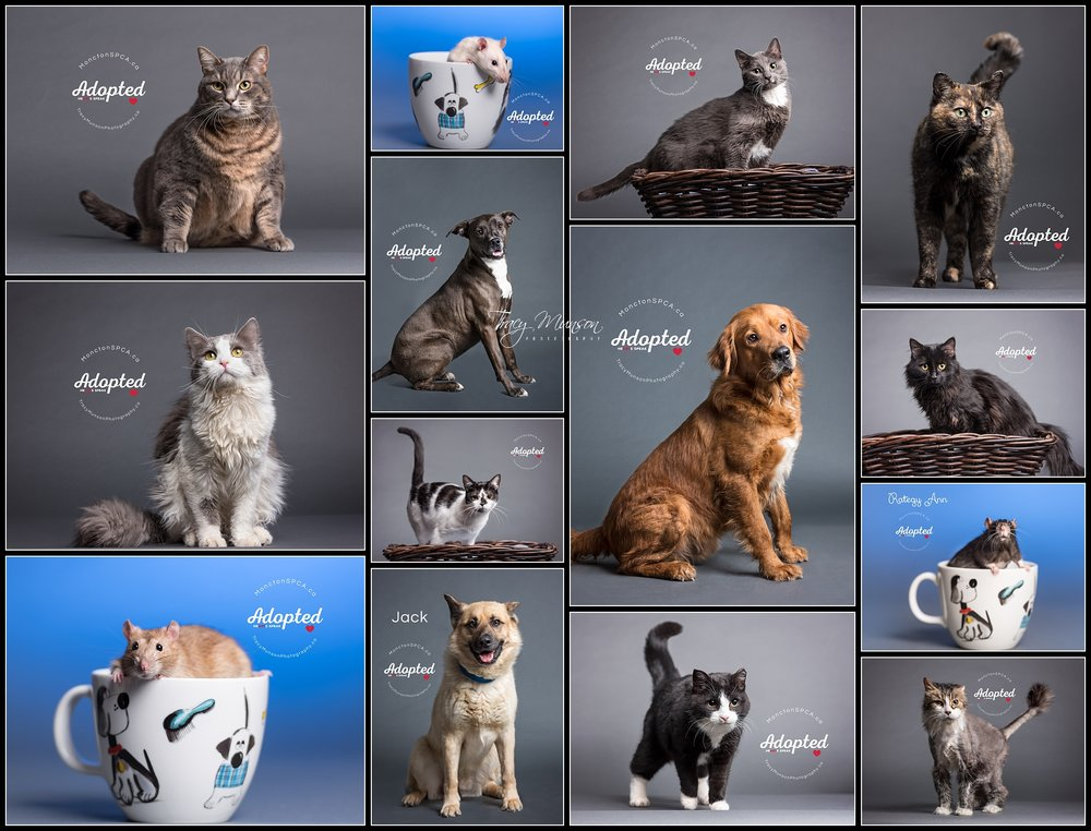 Here are some of the other pets I photographed at the Moncton SPCA last month. All of these lucky pets got snapped up by their forever homes before I even had a chance to post them!