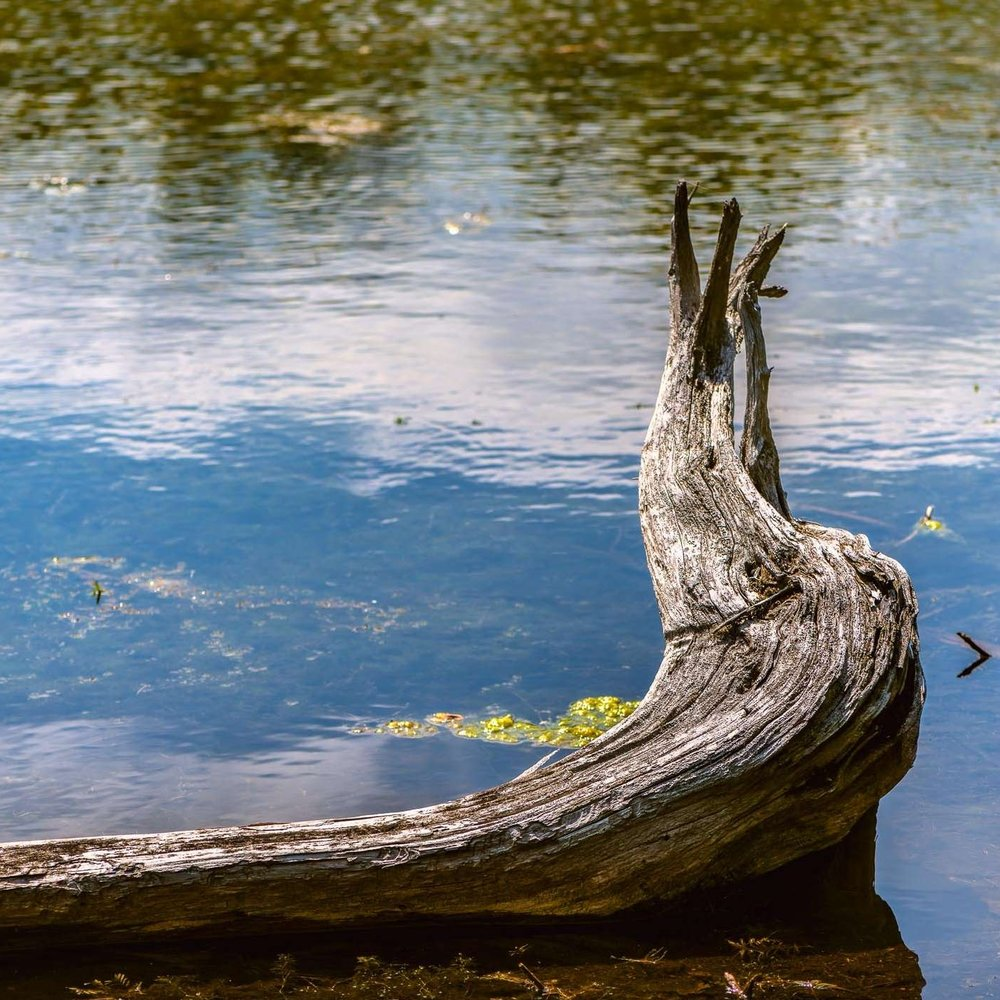 Driftwood at Rest