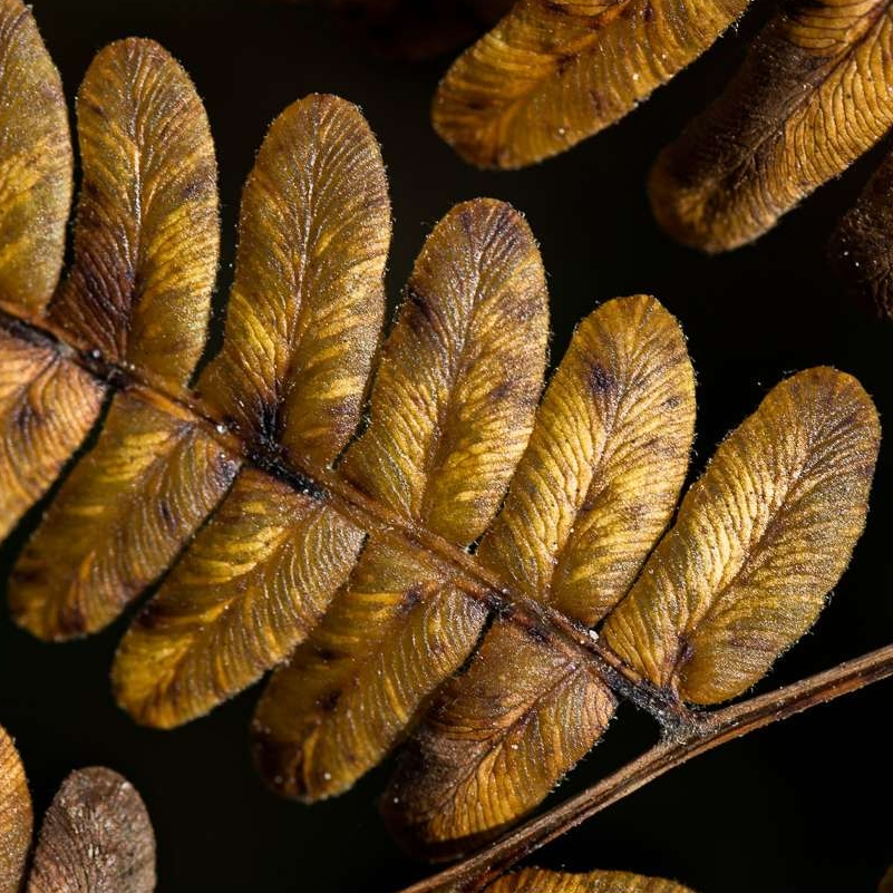 Yellow and Brown Leaves