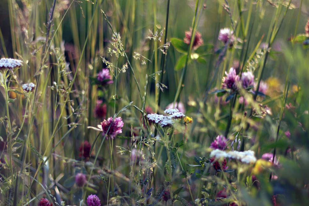 field-flowers-grass-3726.jpg