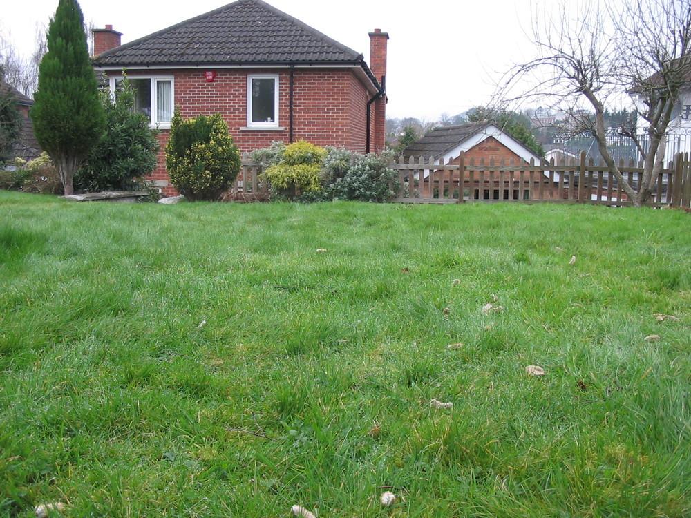stranmillis garden before