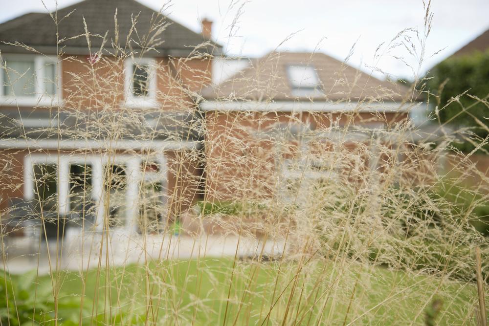 using grasses like stipa in uk garden