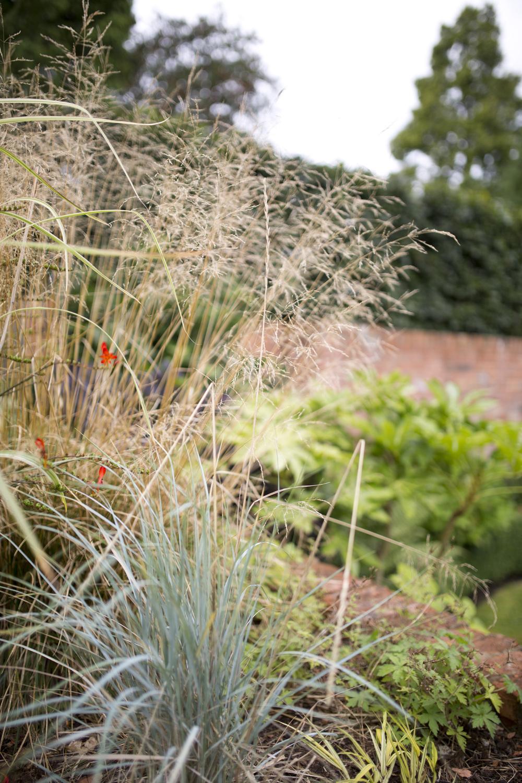 planting plan and detail in uk garden