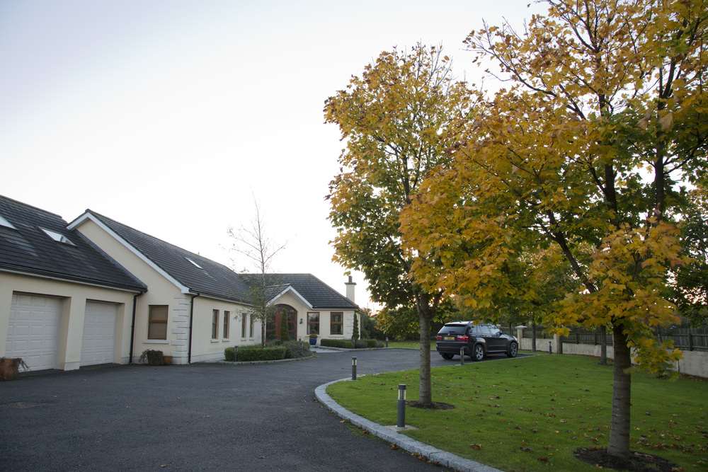 mature tree planting for asphalt driveway construction in belfast