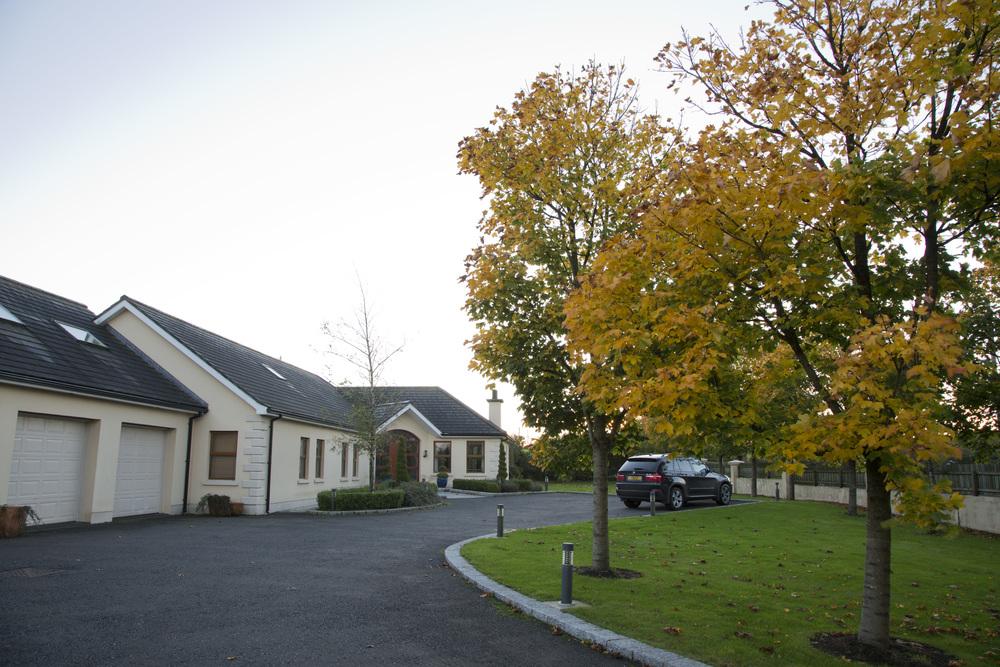 mature tree planting for asphalt driveway construction in belfast