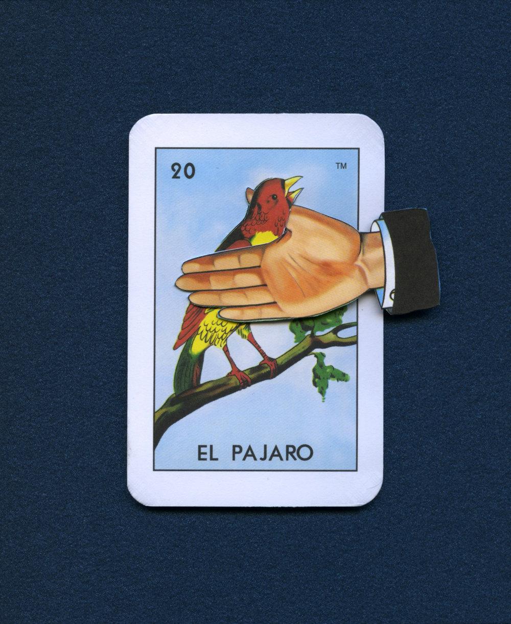 ElPajaro.jpg